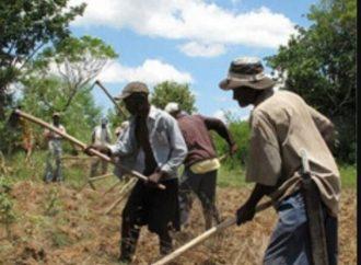 Haïti-Social: Insécurité foncière dans le Nord-est, des paysans appellent à l'aide des autorités