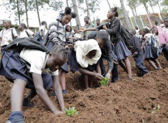 La Fondation Louis G Lamothe pour le renforcement de l'agriculture