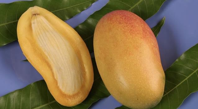 L'exportation de mangues vers les États-Unis en baisse cette année