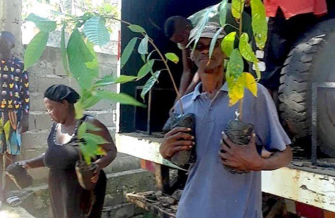 L'USAID soutient la production du cacao dans le Nord d'Haïti